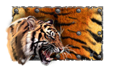 Tigr preview.png